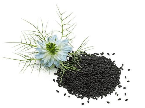 black nigella seeds and flower for 8 Pack C60 Organic Black Seed Oil