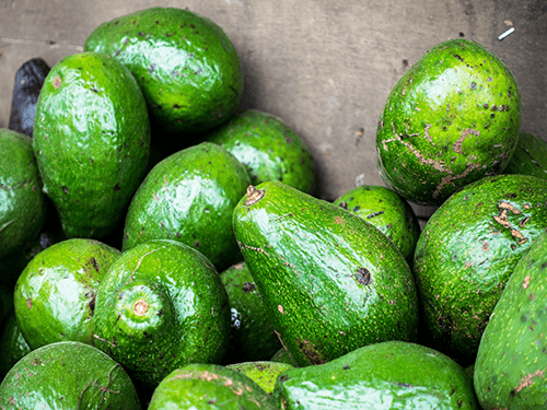 Avocado harvest - perfect for 4 Pack C60 Organic Avocado Oil